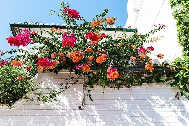 Fleur d'ornement sur une terrasse
