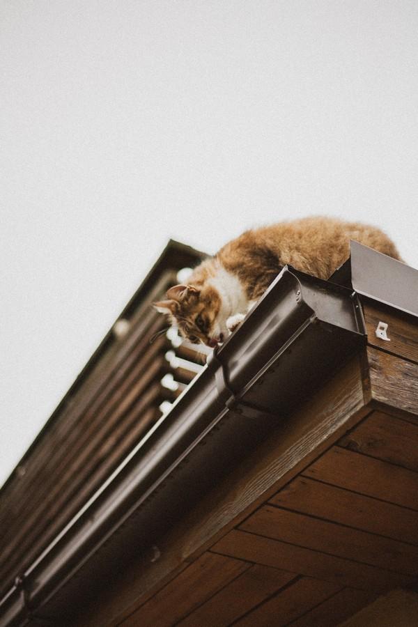 chat qui boit dans un chéneau