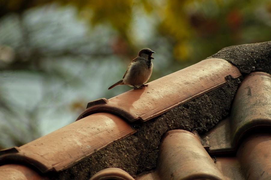 oiseau sur un toit