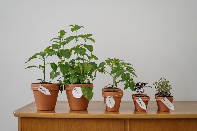 pots de plantes aromatiques